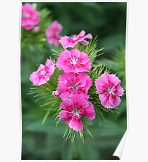 Bonita flor Poster