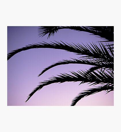 Palm tree sunset Photographic Print