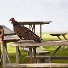 A Vultures Picnic by Richard Lee