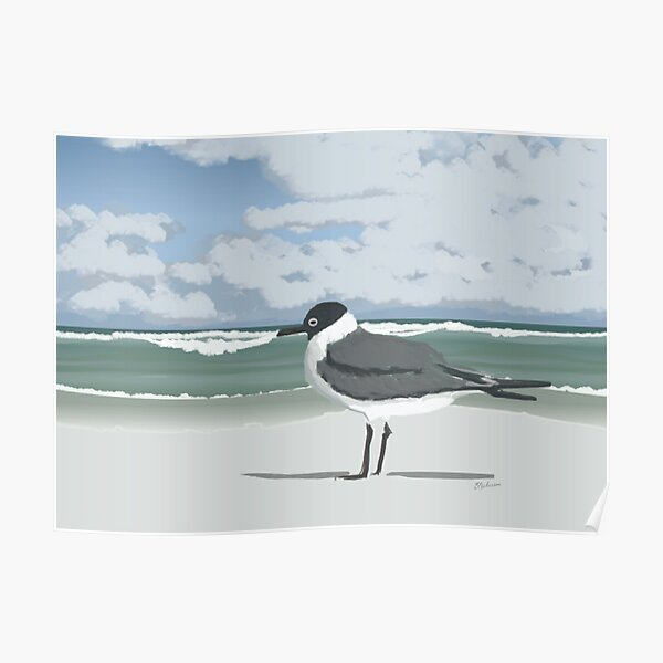 Laughing Gull On Beach  Poster
