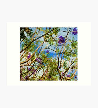 Jacaranda in flower Art Print