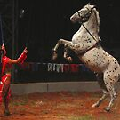 Circus Horse by Christine Ford
