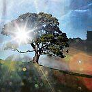 Light of life by Rachel Davison