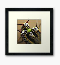 Caterpillars Framed Print