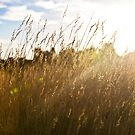Through the grass by Ruben D. Mascaro