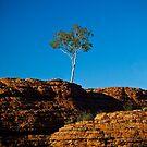 One tree Rock by Ruben D. Mascaro