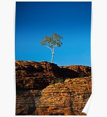 One tree Rock Poster