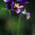 Deepest Purple by Astrid Ewing Photography