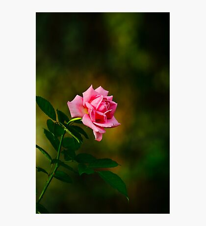 A rose for you! Photographic Print