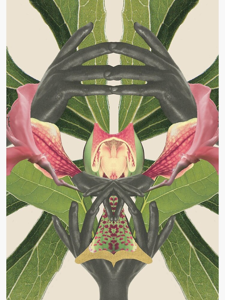 Flower of Birth - collage art, nature by ilariaantolini
