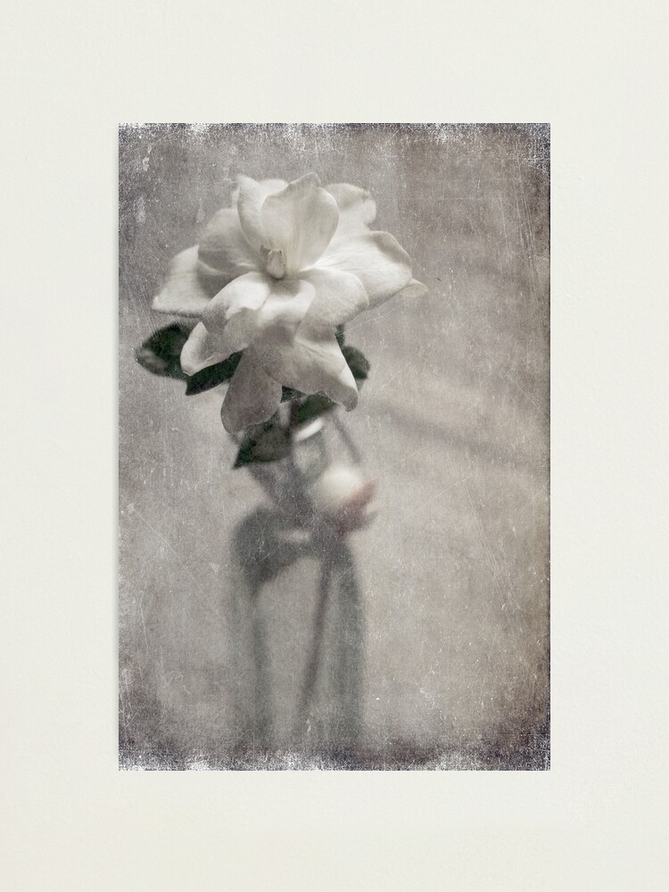 Alternate view of Pure and Simple Photographic Print