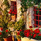 Red Under the Tuscan Sun by Lynnette Peizer