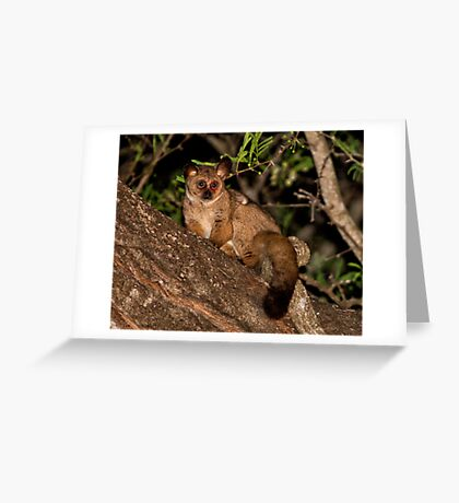Baby Of The Bush Greeting Card