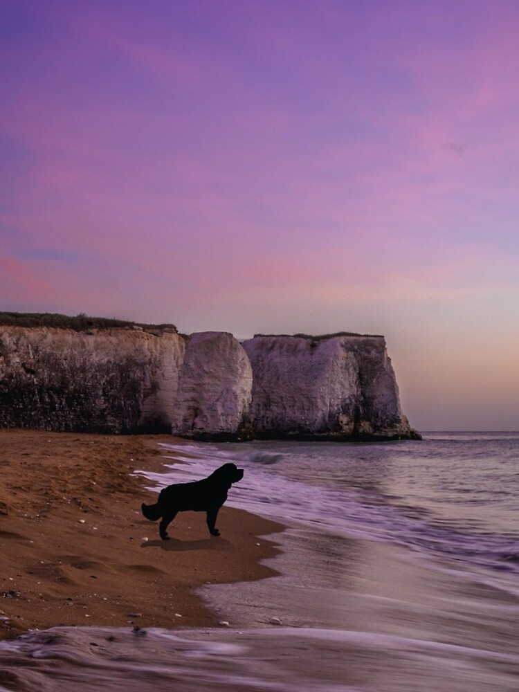Newfoundland dog at Sunset on the Beach by itsmechris