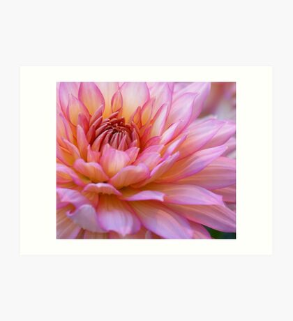 ***  FOREVER YOURS ~ PINK DAHLIA *** Art Print