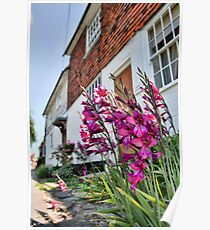 Gladiolus In The Weald Poster