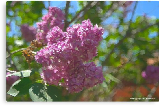Lilacs by Jeff Pierson