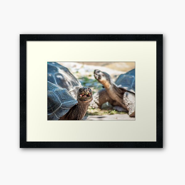 Happy Tortoise | Cincinnati Zoo Framed Art Print
