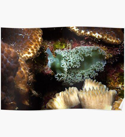 Lettuce Nudibranch Poster