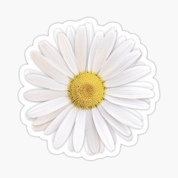 white shasta daisy flower floral sticker Sticker