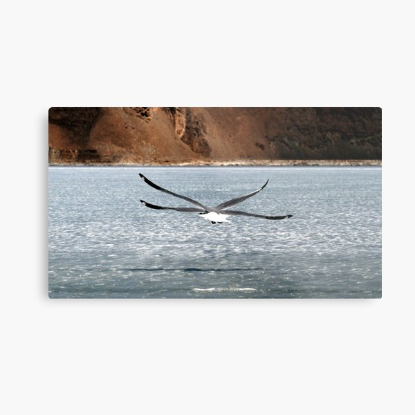 A New Species of Bird? Metal Print
