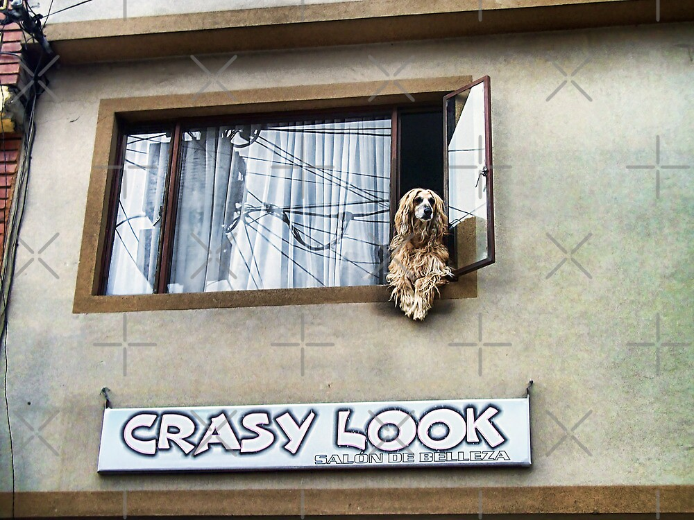 Afghan Hound with a 'Crasy' Look by Maria  Gonzalez