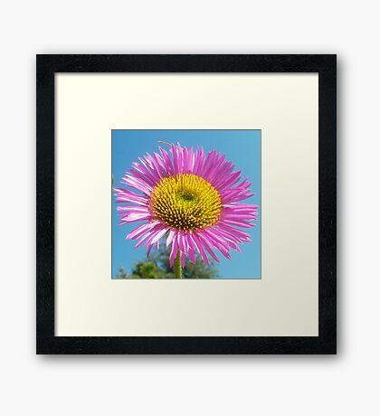 Pink flower against blue sky Framed Print