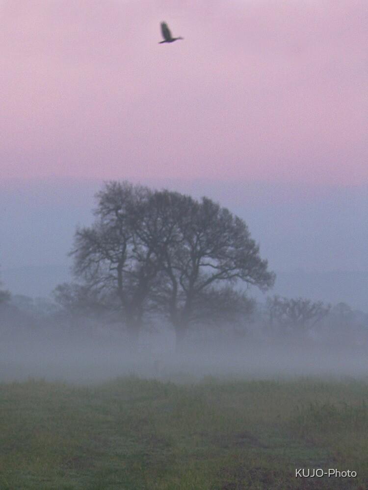 Misty Morning (1), Cheshire by KUJO-Photo