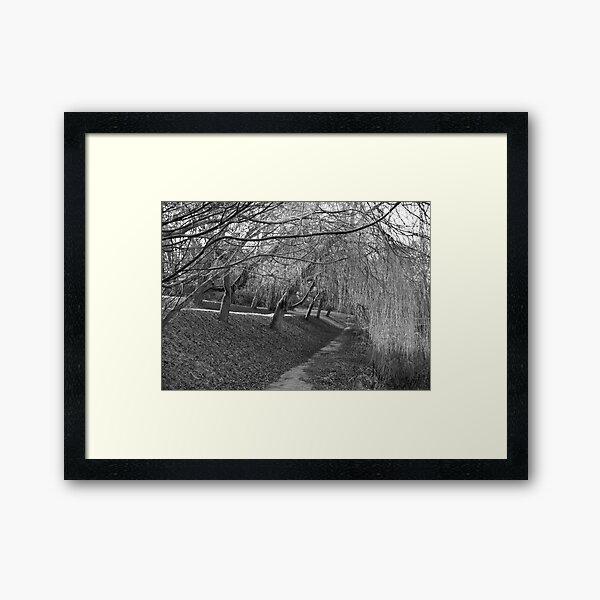 Sleeping Willows Framed Art Print