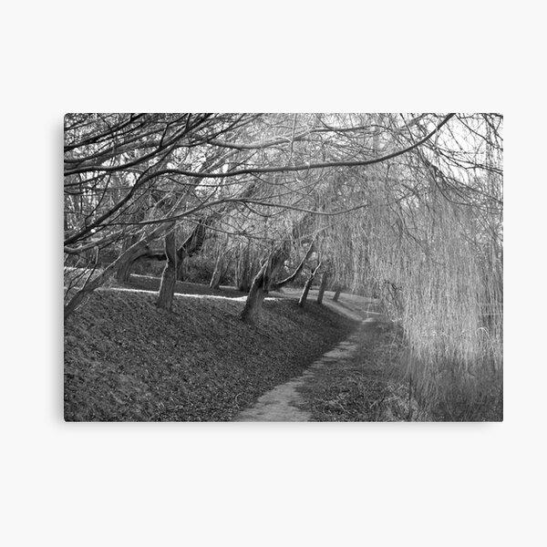 Sleeping Willows Metal Print