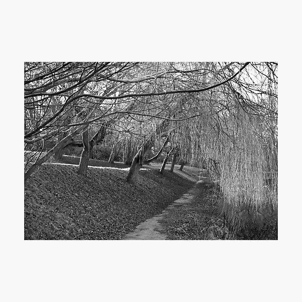 Sleeping Willows Photographic Print