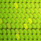 Green Iguana by A V S TURNER