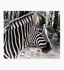 Zebra at the Zoo Photographic Print
