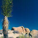 Stone Face, Joshua Tree National Park, California by Pete Paul