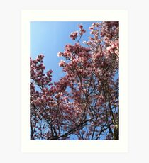 A magnolia in Red Hook Art Print
