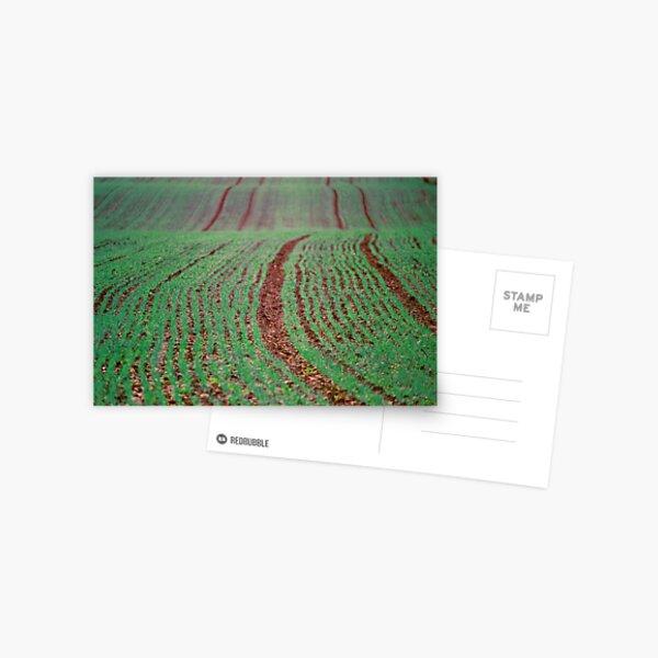 Green Field, Cheshire Postkarte