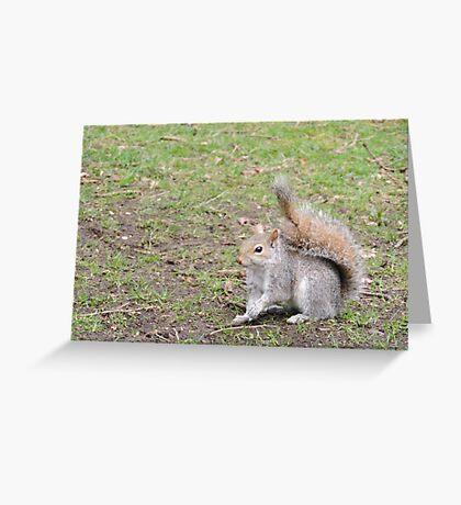 Perky Greeting Card