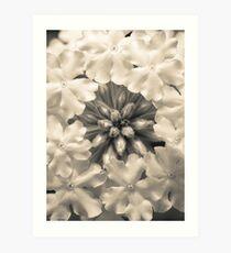 Monochrome Flora Art Print