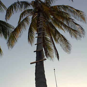 Palm Tree by PointBlankInd