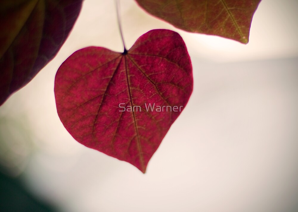 Who Says Love Doesn't Grow On Trees? by Sam Warner