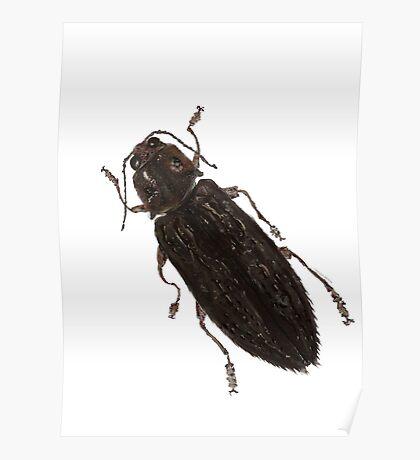 Texania - Jewel Beetle Poster