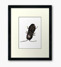 Mastogenius - Jewel Beetle Framed Print