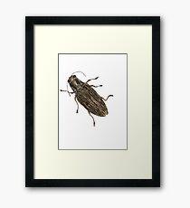 Spectralia - Jewel Beetle Framed Print