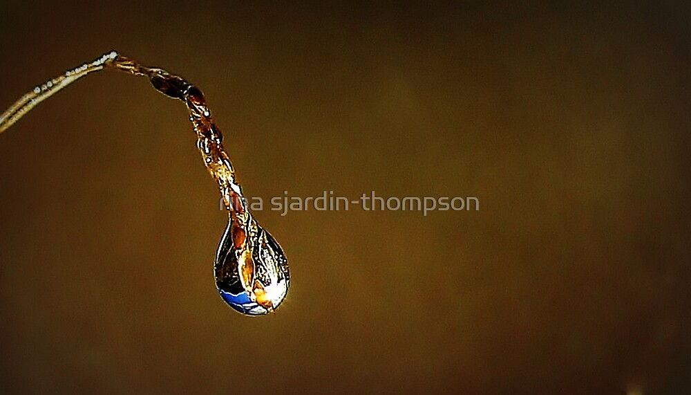 sparkles v by rina sjardin-thompson