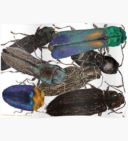 Jewel Beetle Crowd Poster