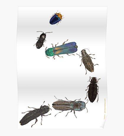 Jewel Beetle Parade Poster