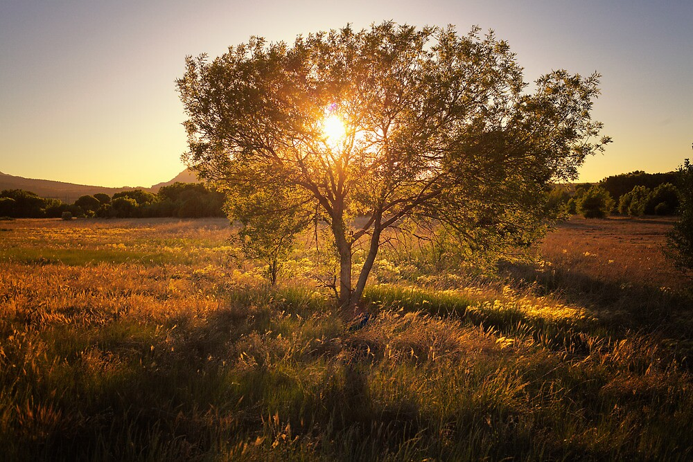 Tree 'O' Gold by Bob Larson