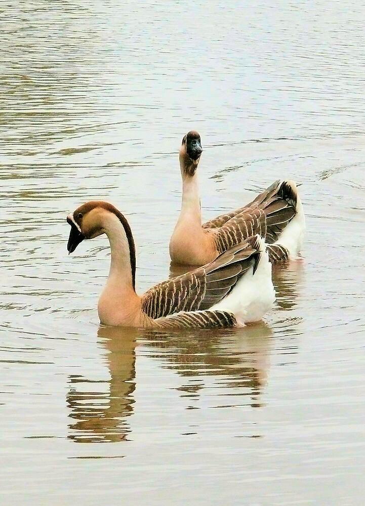 Goosey Goosey Gander by elsha