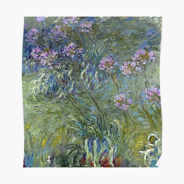 Agapanthus - Claude Monet  Poster