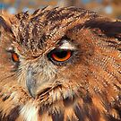 Eurasian Eagle Owl by Graham Taylor